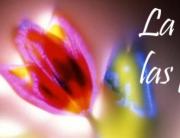 la-luz-de-las-flores-torrecillas
