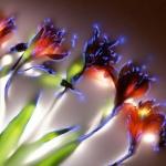 robert-buelteman-flores-9
