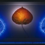 robert-buelteman-flores-3