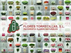 fotografias-flores