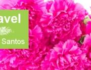 clavel-los-santos-flores-torrecillas