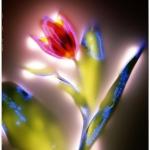 robert-buelteman-flores-17