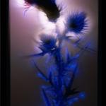 robert-buelteman-flores-14