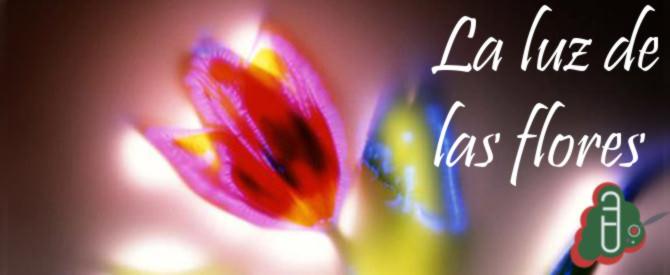 La luz de las flores