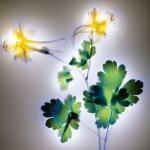 robert-buelteman-flores-10
