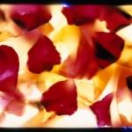 robert-buelteman-flores-4