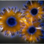 robert-buelteman-flores-1